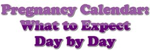 Pregnancy Calendar: What to Expect Day by Day